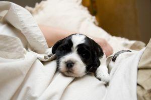 Nou-nascutul si animalul de companie