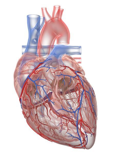 """Inima """"peticita""""cu celule stem?"""