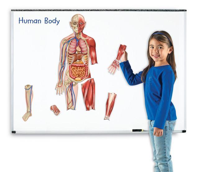 Corpul-uman