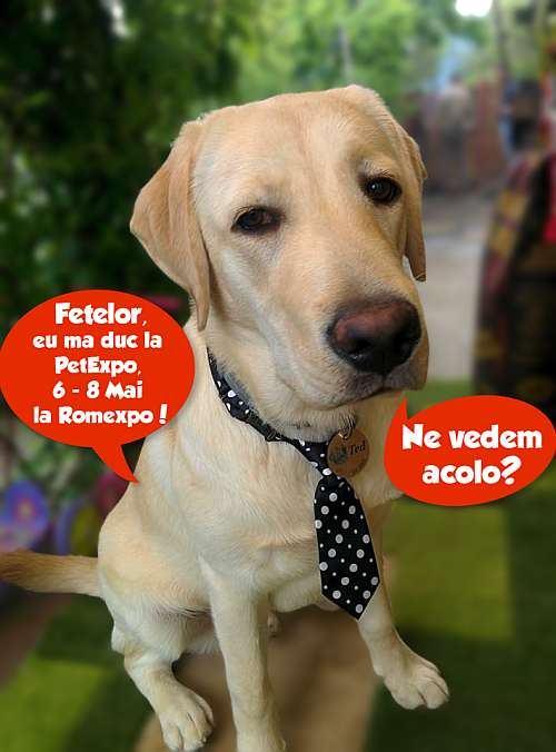 Aproape 45.000 de like-uri pentru concursul Mascota Pet Expo 2016