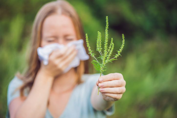 alergie-ambrozie-simptome