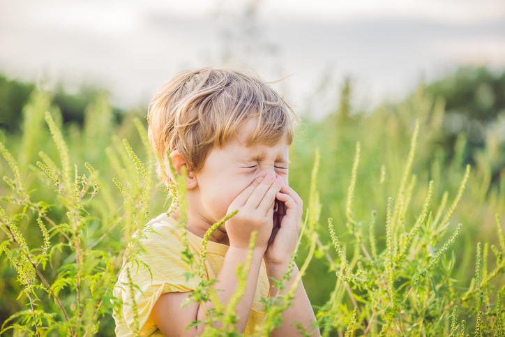 alergie-ambrozie