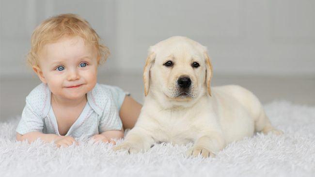Copiii care cresc cu animale de companie sunt mai sanatosi datorita unor microbi