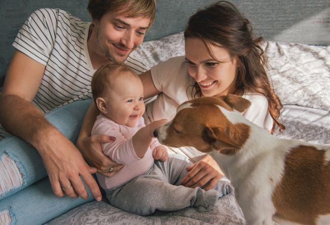 Animalele de casa - posibil pericol pentru nou-nascuti?