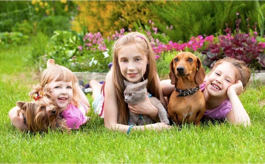 Cum ii explici copilului pierderea animalului de companie