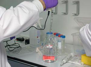 Testarea sangelui placentar la nastere