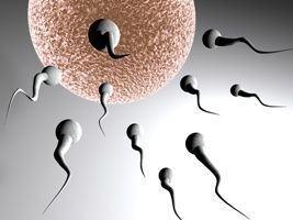 Celule stem identificate in ovule