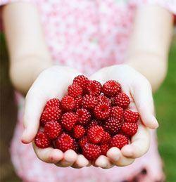 Zmeura si frunzele de zmeura rosie trateaza infertilitatea feminina