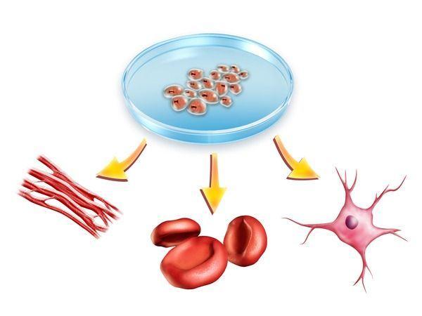 Intrebari si raspunsuri frecvente despre celulele stem