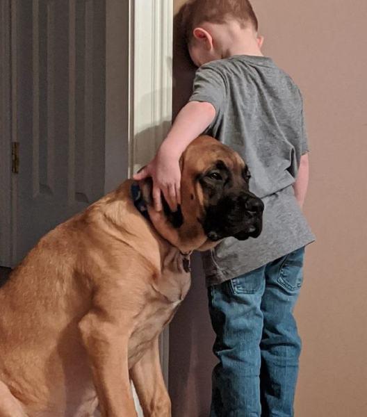 Cainele a fost singurul care si-a dat seama de nevoia de sustinere emotionala a copilului pedepsit