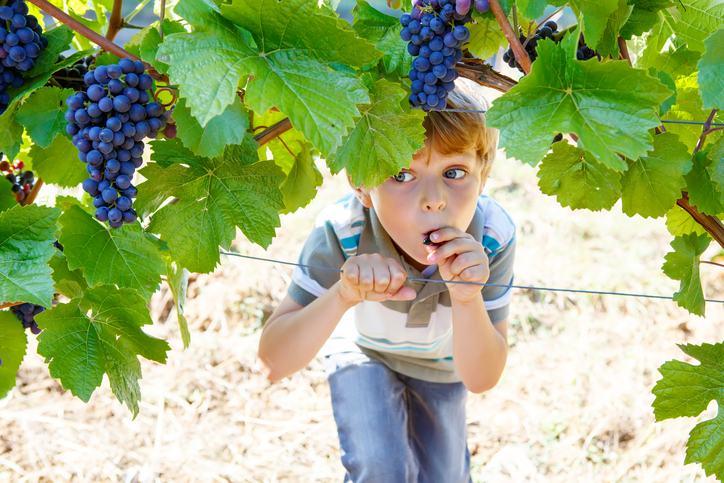 10 modalitati de distractie pentru copii, specifice toamnei