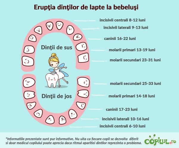 eruptia-dentara-bebelusi