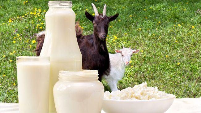 lapte-capra