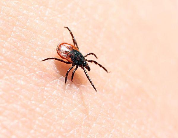 Borelioza (boala Lyme)