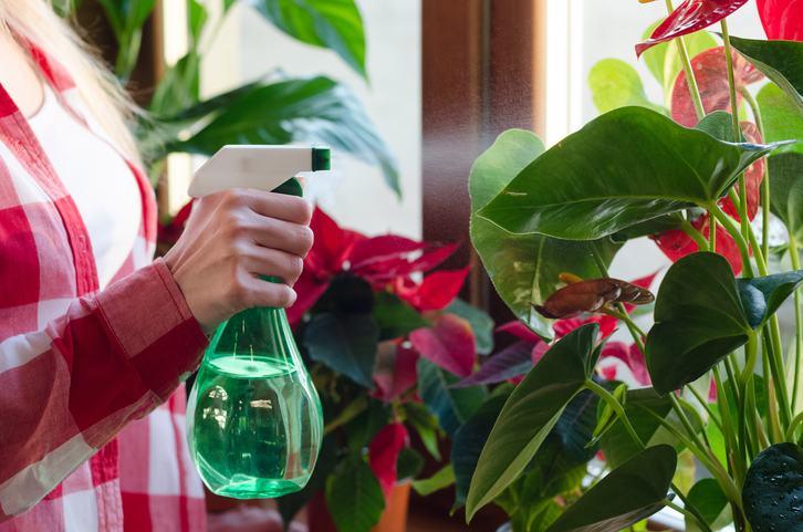 Suferi de alergii? Aceste plante nu trebuie sa lipseasca din locuinta ta