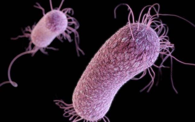Semnal de alarma: Superbacteriile reprezinta o amenintare la fel de mare precum schimbarea climatica sau razboaiele