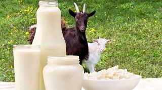 Atentie! Laptele de capra vandut in piete nu este lapte de capra