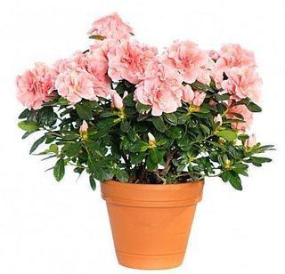 10 plante care purifica aerul din casa ta