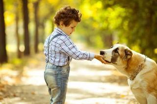 Copilul tau isi doreste un caine? Top 5 cele mai prietenoase rase de caini