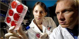 Preturi pentru recoltarea si stocarea de celule stem