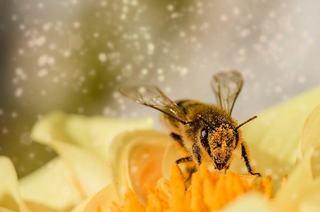 Sarcina si polenul