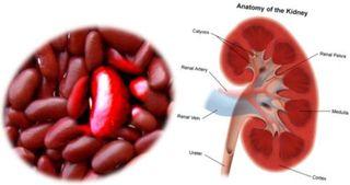 Fructe si legume care arata ca organele pentru care sunt benefice