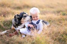 Un bebelus, in stare critica dupa ce a fost atacat de cainele familiei