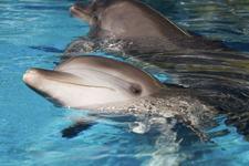 Fetita cu autism, ajutata sa se faca bine de delfini