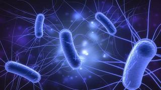 Infectia urinara cu bacilul E-coli