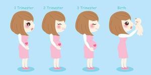 Cat de mare este bebelusul in fiecare saptamana de sarcina. Comparatii haioase