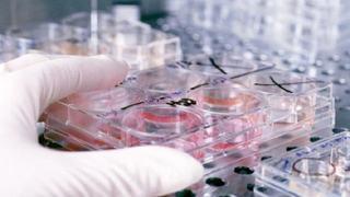 REZULTATUL testului pentru fetita a carei mama a fost diagnosticata cu coronavirus