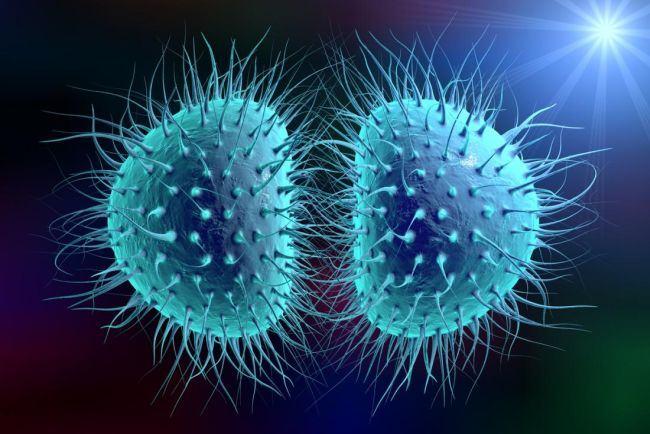 """Cum se transmite meningita. Ce spune Ministerul Sanatatii in cazul elevei moarte de la liceul """"Gheorghe Lazar"""""""