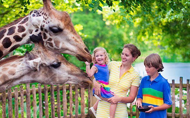 De ce e atat de importanta vizita la Gradina Zoologica