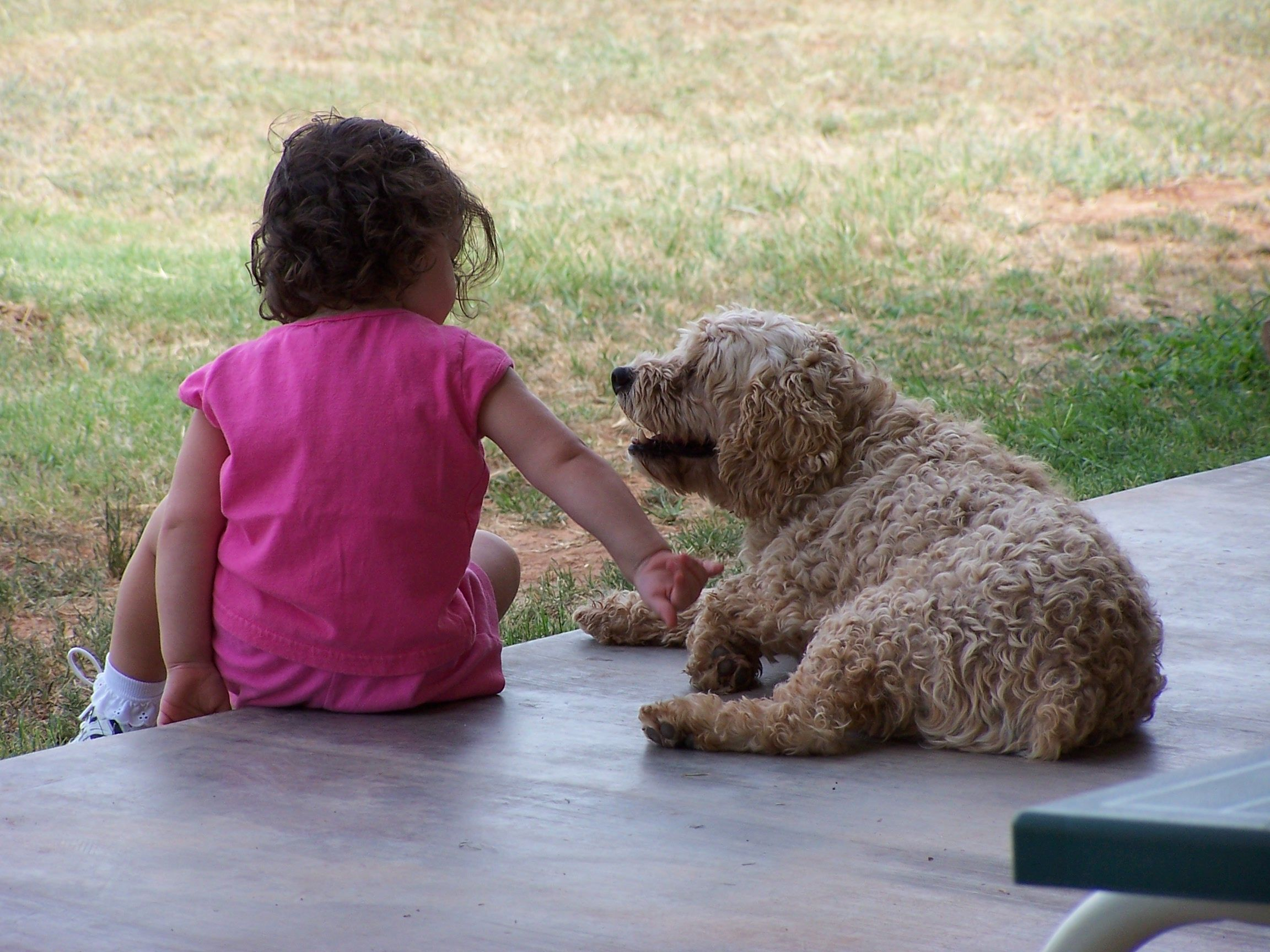 Frica de animale la copii
