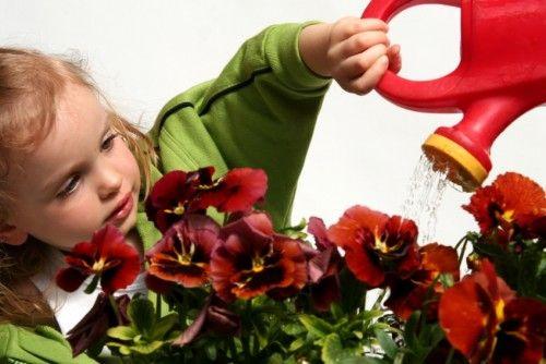 Plante/flori otravitoare de evitat cand ai un copil mic