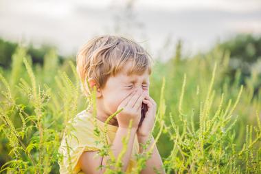 Alergia la ambrozie: simptome, tratament si recomandari