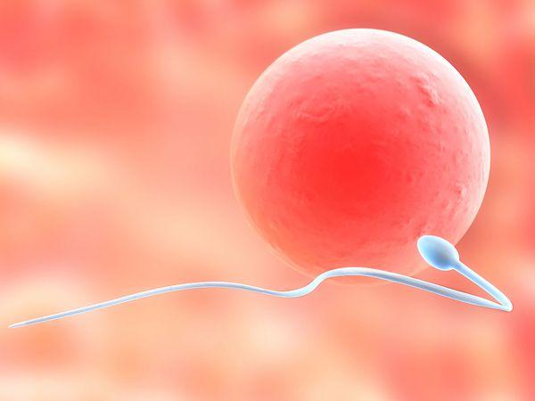 Teratospermia, cauza a infertilitatii la barbati