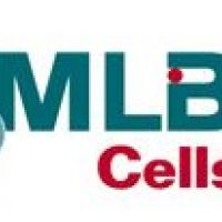 MLB Cells Romania